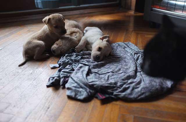 cucciolo abbandonato2
